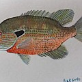Freshwater Fish Group - Art Group